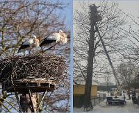 100-letnie bocianie gniazdo strąciła wichura. Mieszkańcy postanowili je naprawić, aby podtrzymać tradycję (ZDJĘCIE)
