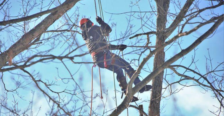 PODKARPACIE. Śmiertelny wypadek podczas wycinki drzew. Nie żyje 26-latek