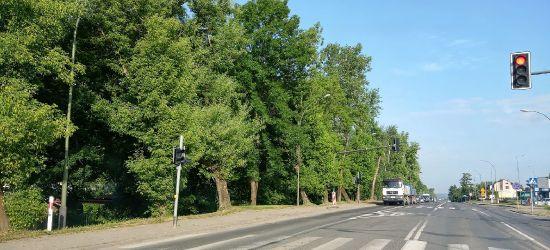 ECHA INTERWENCJI. Do wycięcia 90 drzew. Posadzą 50 nowych (ZDJĘCIA)