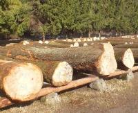 """Drewno z naszych lasów """"łakomym kąskiem"""" (ZDJĘCIA)"""