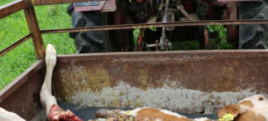 AKTUALIZACJA: Dwudziestolatek zdewastował groby na sanockim cmentarzu (ZDJĘCIA)
