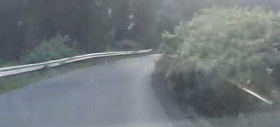 INTERWENCJA: Trudna trasa, a do tego zarośla zasłaniające drogę (ZOBACZ FILM)