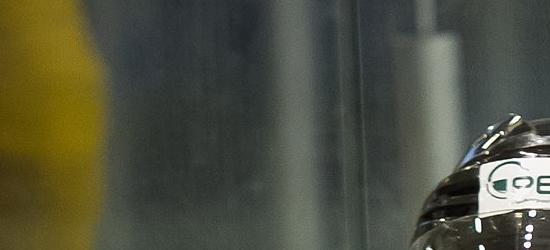 BIESZCZADY: Niedźwiedź żerował na resztkach żubra (ZOBACZ FILMY)