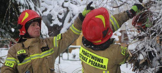 Akcja sanockich strażaków. Samochód przygnieciony przez drzewo (VIDEO, ZDJĘCIA)