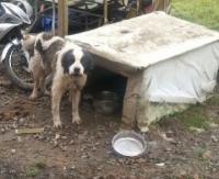 Zostawił psy bez opieki. Zwierzęta przez kilkanaście dni były bez jedzenia i wody! (ZDJĘCIA)