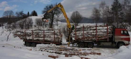 Zasobność lasów jedna z najwyższych w Polsce