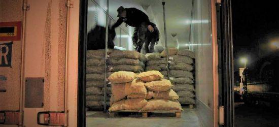 Afgańczyk ukrył się w transporcie ziemniaków aby nielegalnie dotrzeć do Francji. Trafił do Polski. Tu zatrzymała go Straż Graniczna