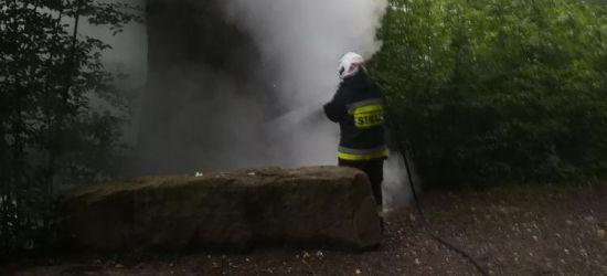 PODKARPACIE: Celowe podpalenie pomnika przyrody? (ZDJĘCIA)