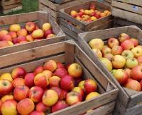 DZISIAJ: Jabłka dla sanoczan. Czekają na parkingu przy Arenie Sanok