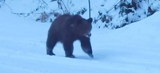 BIESZCZADY: Jeszcze nie pora na zimowy sen (VIDEO)