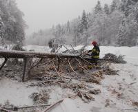 KRONIKA STRAŻACKA: Uszkodzone samochody, połamane konary drzew i niebezpiecznie nad chodnikami