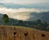 Bieszczadzkie lasy mają szansę znaleźć się na liście UNESCO. Trwają konsultacje społeczne
