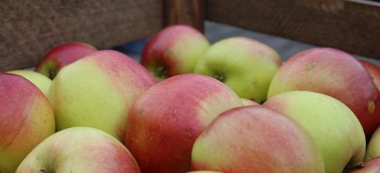 Świeże jabłka rozdawane przy Arenie Sanok