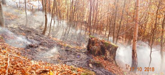 Pożar lasu w Bieszczadach (FOTO)