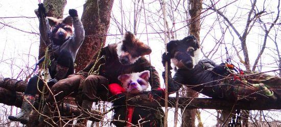 Niebezpieczny incydent w feministycznym obozie Kolektywu Wilczyce. Aktywistki nadal okupują las
