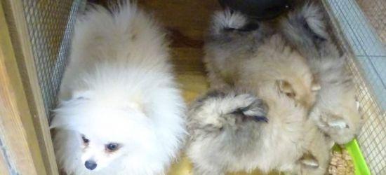 GRANICA: Przewoził psy. Były nieprawidłowości (FOTO)