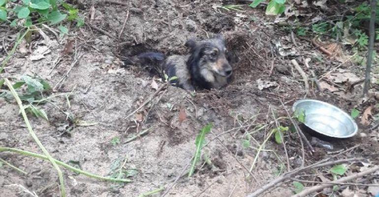 REGION: Zatrzymano właściciela psa zakopanego żywcem. Jak się tłumaczył? (ZDJĘCIA)