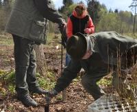 Nowe pokolenie lasu w Lutowiskach (ZDJĘCIA)