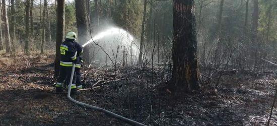 Rośnie zagrożenie pożarowe w lasach (ZDJĘCIA)