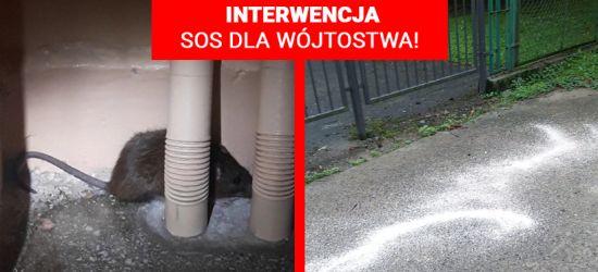 INTERWENCJA: SOS dla Wójtostwa! Sygnał Internauty (VIDEO, ZDJĘCIA)