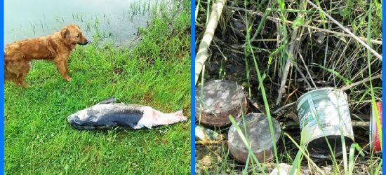 Śmieci i martwa ryba. Kontrole na łowiskach (ZDJĘCIA)