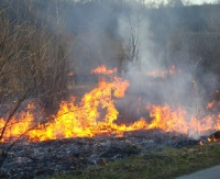 Trwa proceder wypalania traw. Niebezpiecznie w Nadleśnictwie Baligród (ZDJĘCIA)
