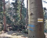 """INTERWENCJA: Powalone drzewa i sporo śmieci na szlaku na Orli Kamień. """"Kto odpowiada za stan ścieżki po zimie?"""" (ZDJĘCIA)"""