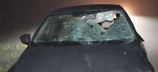 Kierowca skody został ranny po zderzeniu z łanią