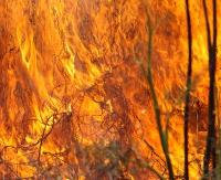 Pożar w jednym z sanockich ogródków działkowych