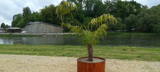Palma na sanockiej plaży (VIDEO, ZDJĘCIA)