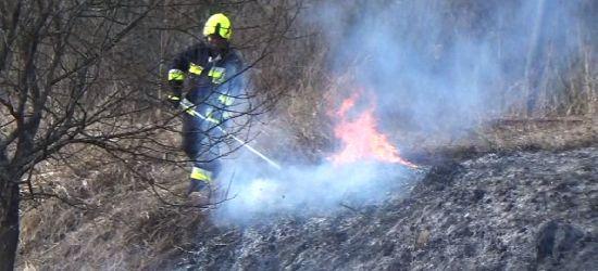 ZAŁUŻ: Pożar traw. Błyskawiczna akcja strażaków (VIDEO)