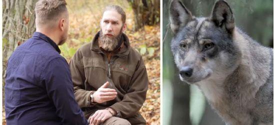 """REPORTAŻ: """"Wilki nie są zagrożeniem dla człowieka"""" (VIDEO)"""