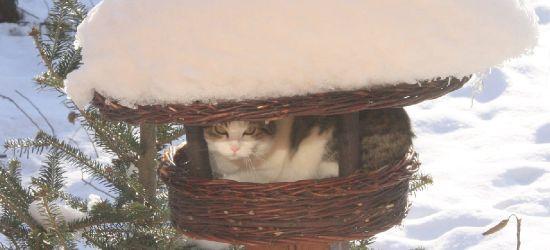 Kochacie ptaszki śpiewające? To pilnujcie swoje kochane koty!