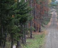 Gminy Zagórz ogłasza przetarg ofertowy na sprzedaż drewna wielkowymiarowego