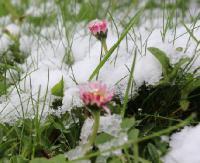 SANOK: Chłodny i zimowy czwartek… 20 kwietnia (ZDJĘCIA)