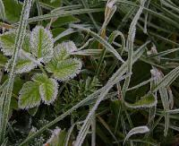 IMGW OSTRZEGA: Prognozowany spadek temperatury poniżej 0 stopni Celsjusza. W rejonach podgórskich do -7°C