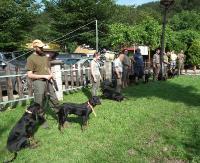 Jak wygląda praca psów myśliwskich? Przekonali się o tym widzowie uczestniczący w trzeciej już edycji konkursu pracy psów ogarów i gończych (ZDJĘCIA)