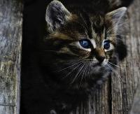 ZMIENIONE MIEJSCE ZBIÓRKI: Z pomocą dla sanockich kotów. By zwierzaki mogły przetrwać zimę