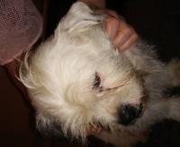 SANOK: W noc sylwestrową znaleziono psa (ZDJĘCIE)