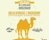 Głosuj na pierwszy, sanocki Orszak Trzech Króli. Główną nagrodą jest wielbłąd!