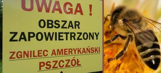 Panuje zgnilec amerykański pszczół. Wyznaczono kolejne obszary zapowietrzone