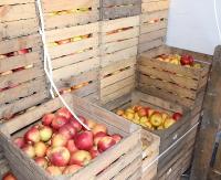 Dzisiejsza dostawa jabłek odwołana!