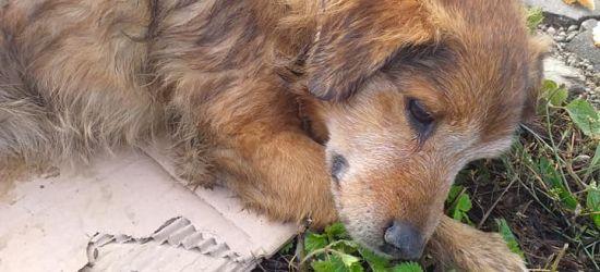 Sprawa psa z Długiego. Czworonóg nie przeżył