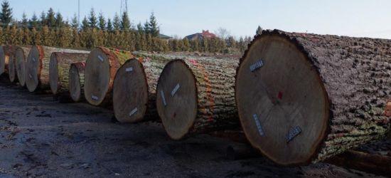 Cenne drewno na sprzedaż