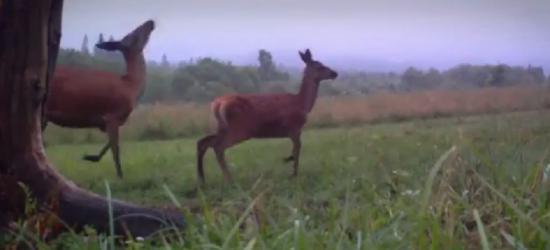"""SOBOTA: ,,Kraina wilka, niedźwiedzia i… yeti."""" Góry Słonne na antenie TVP 2 (FILM)"""