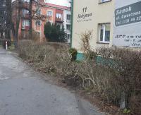 SANOK: Ślisko na drogach. 28-latek wjechał w żywopłot przy ul. Kolejowej (ZDJĘCIA)