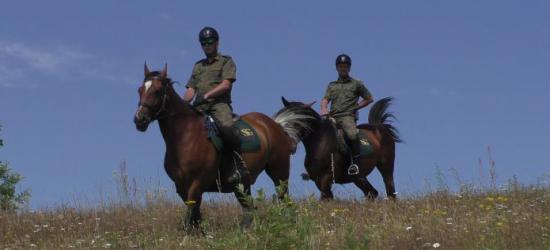 """Konie bieszczadzkich pograniczników ,,wystąpiły"""" w Lutowiskach (ZDJĘCIA)"""