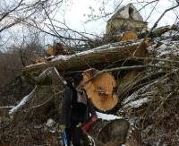 LESKO24.PL: Trwa śledztwo w sprawie wycinki w Terce. Kolejna afera z drzewami w gminie Solina? (ZDJĘCIA)