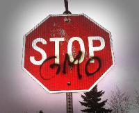 """Radna z Komańczy walczy z GMO """"Komu polski rząd robi prezent wprowadzając tylnymi drzwiami GMO?"""""""
