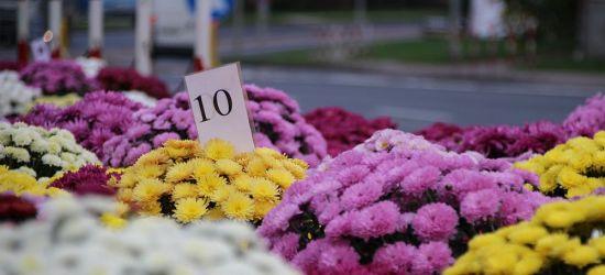 SANOK: Cmentarze otwarte. Sprzedający chryzantemy liczą straty (ZDJĘCIA)
